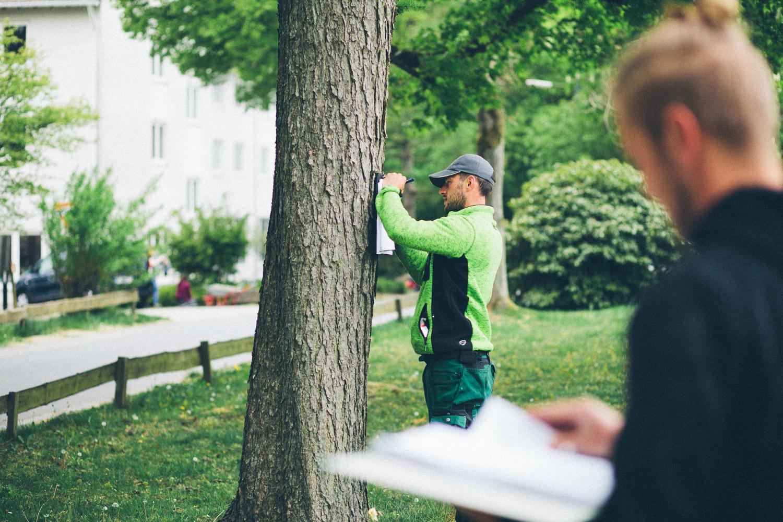 Wir haben ausgebildete Baumkontrolleure bei uns im Team, die Ihren Baumbestand zunächst aufnehmen und auf den Prüfstand stellen. Nun können ggf. Maßnahmen am Baum oder im nahen Umfeld zur Verbesserung des Zustandes festgeschrieben werden.